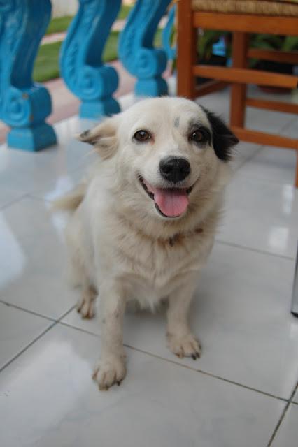 Наша филиппинская собака Aqua