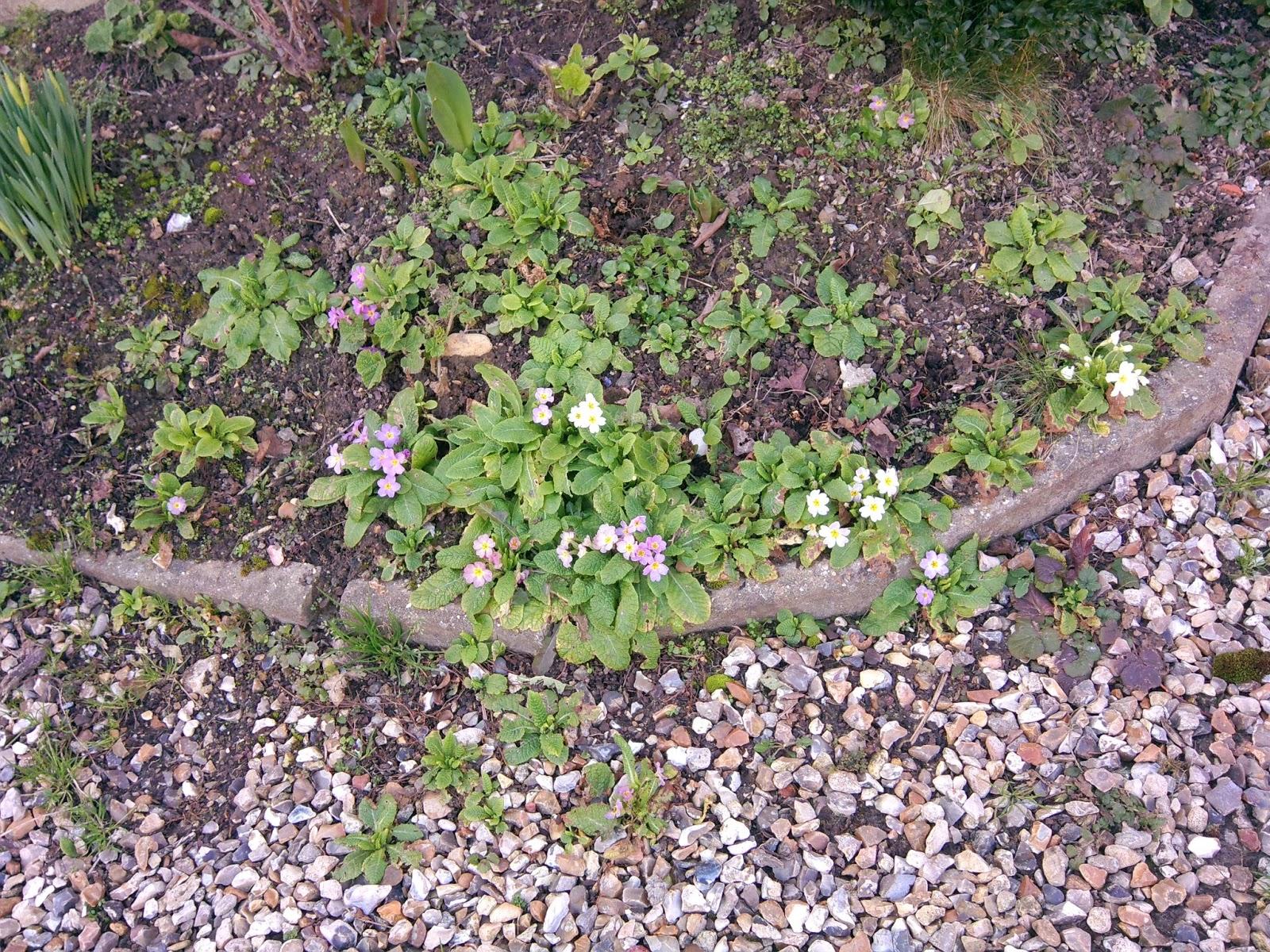 Mon jardin imparfait f vrier 2013 for Le jardin imparfait