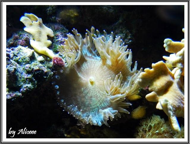 gradina-zoologica-Nyiregyhaza-corali