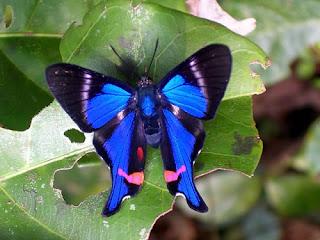 foto kupu kupu indah - gambar binatang - foto kupu kupu indah