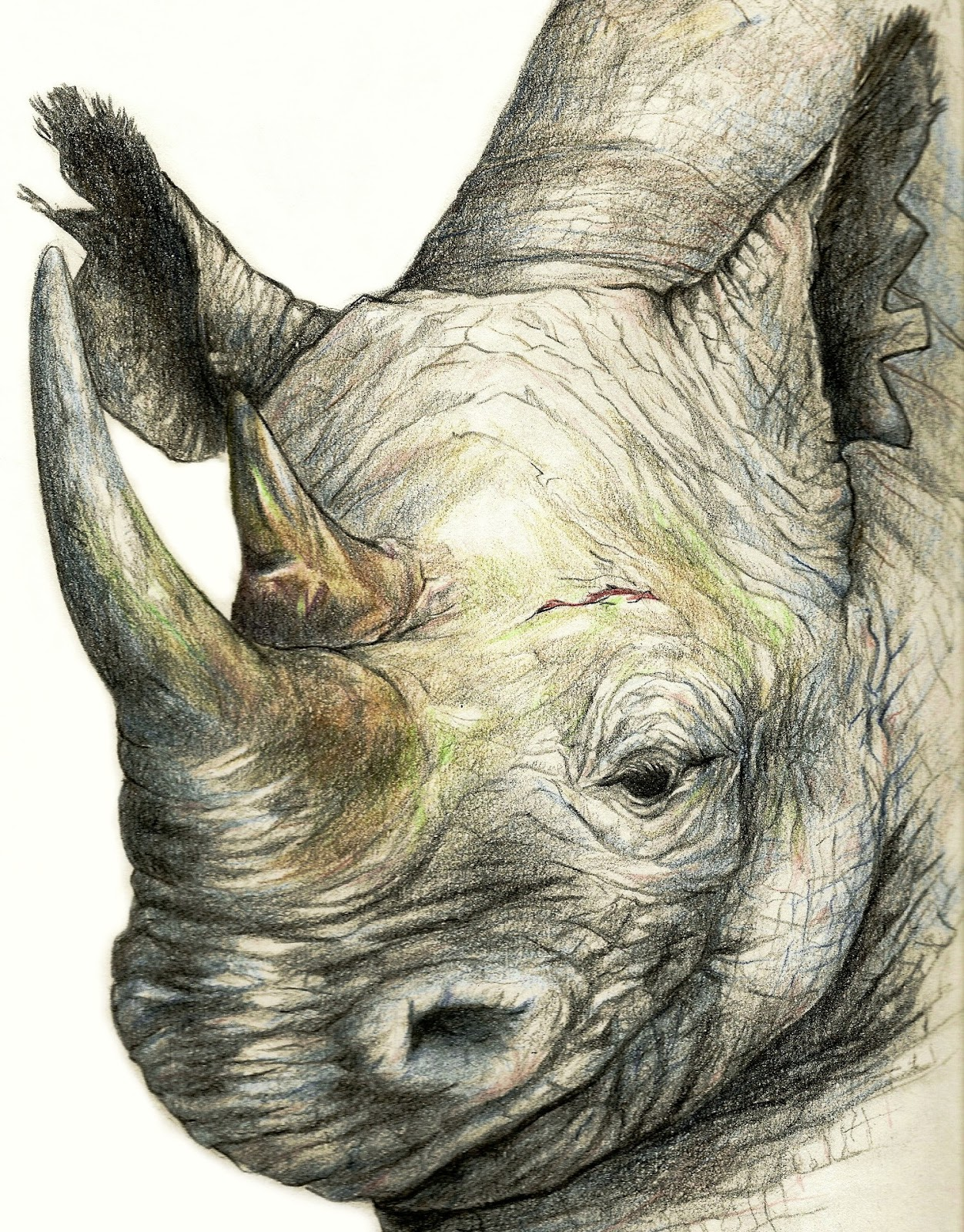 pencil drawings of animals - HD 801×1024