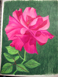 Fourth photo of a Work in Progress - Color Pencil Drawing of a Pink Rose
