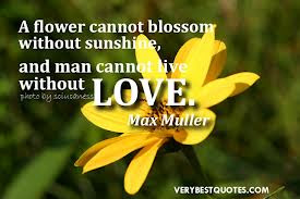 Quotes About Flowers On Flower Quote For Roses
