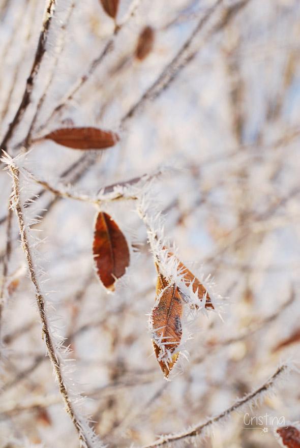 hojas heladas