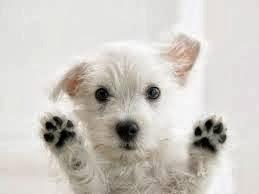 fotos de animales domésticos - Wikipedia:Imágenes destacadas Animales Wikipedia, la