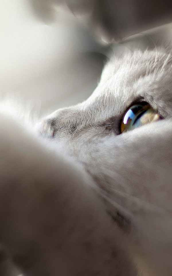 White Cat Looking Up  Galaxy Note HD Wallpaper