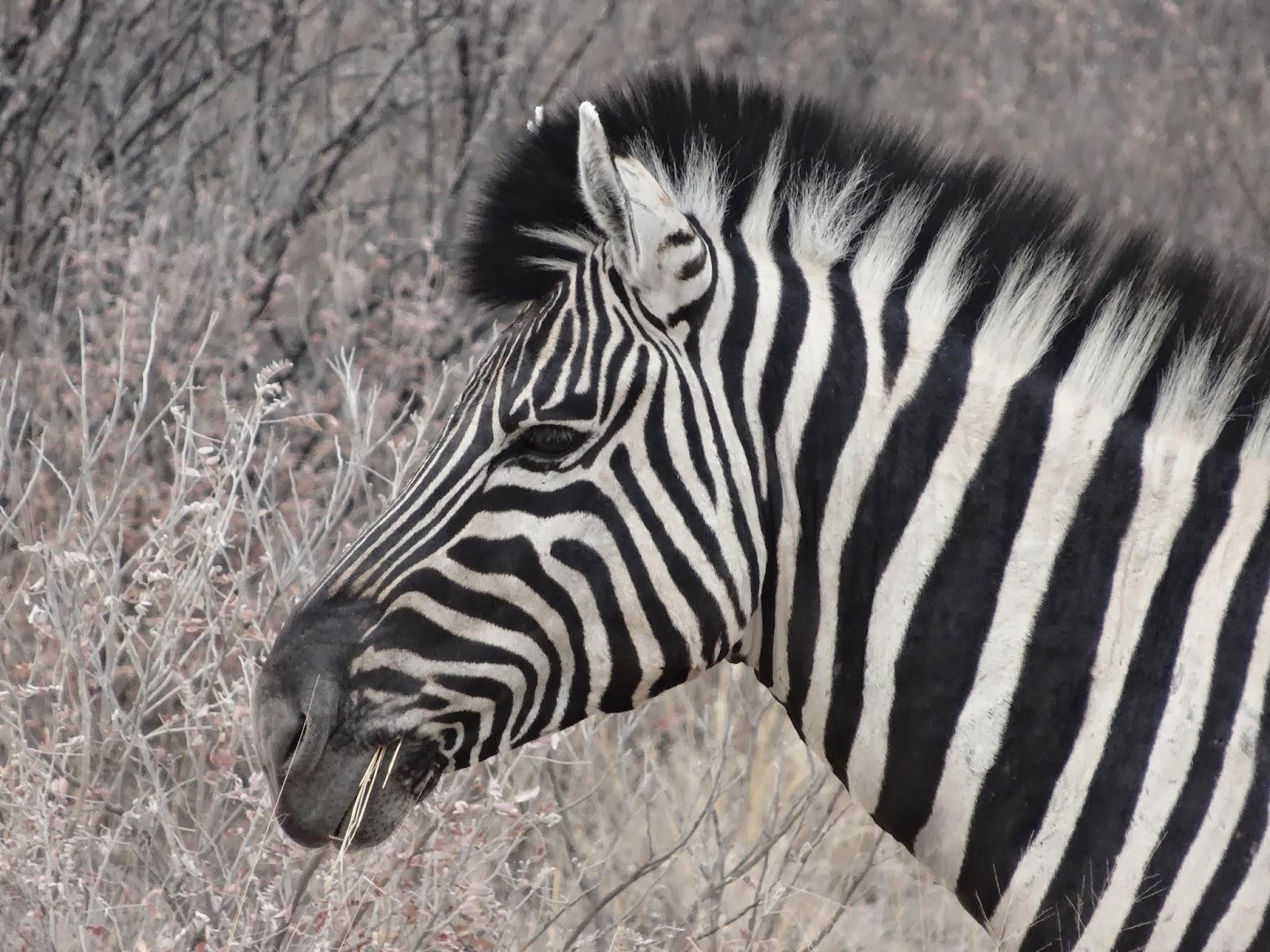 Site de rencontre pour zebre