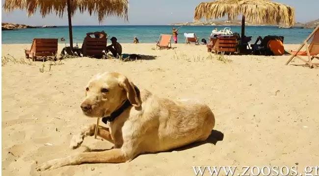 Η νομοθεσία για τα σκυλιά στην παραλία δεν έχει αλλάξει. Διαβάστε τι ισχύει.