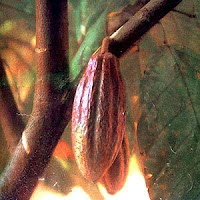 the goddess house blessings of ixcacao and the cacao tree