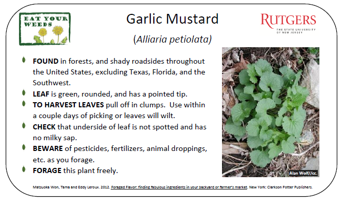 Design a research study question for garlic mustard invasion?