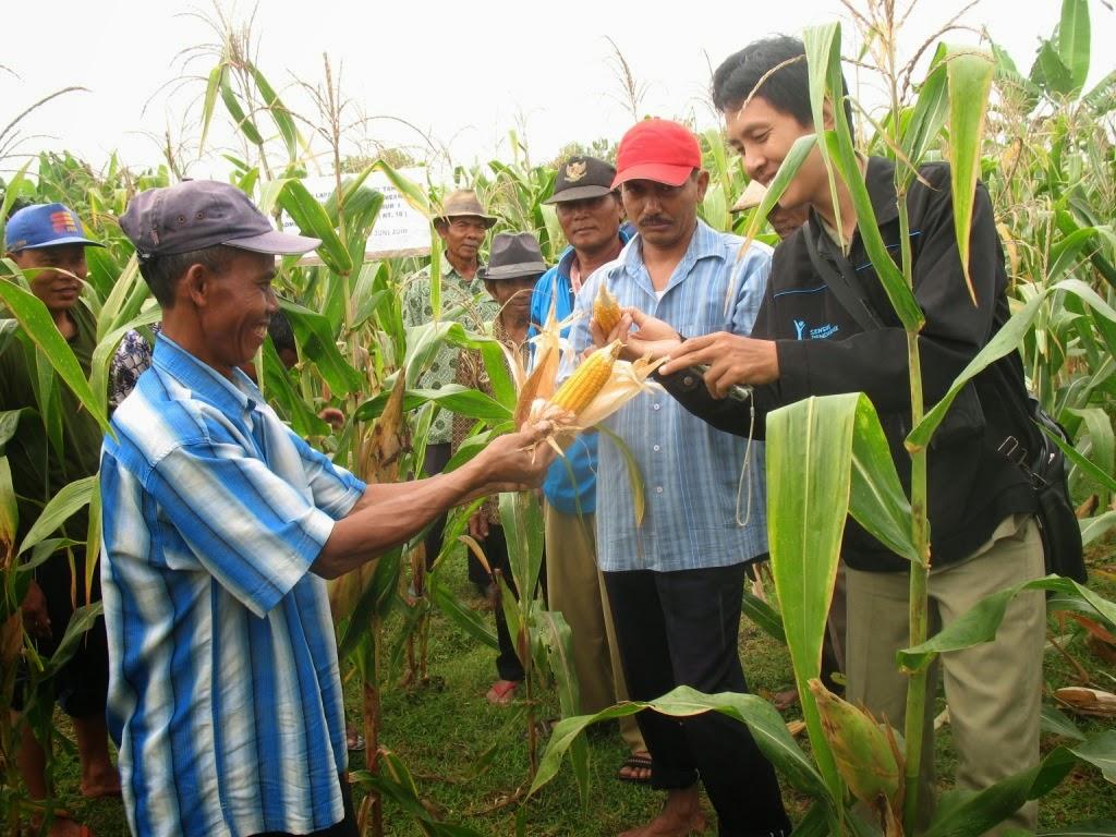Penyuluh Pertanian Harus Angkat Martabat Petani