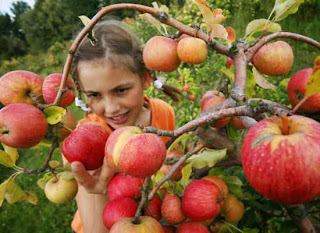 How to Start Apple Farming Business