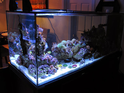 current usa orbit marine led aquarium light product review marine