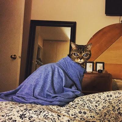 Matilda, kucing dengan mata besar misterius