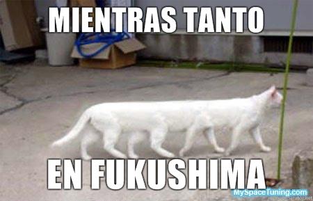 Fukushima: nació un conejo mutante