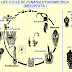ASEXUAL REPRODUCTION IN FUNARIA