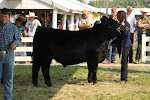 2012 Reserve Champion Steer