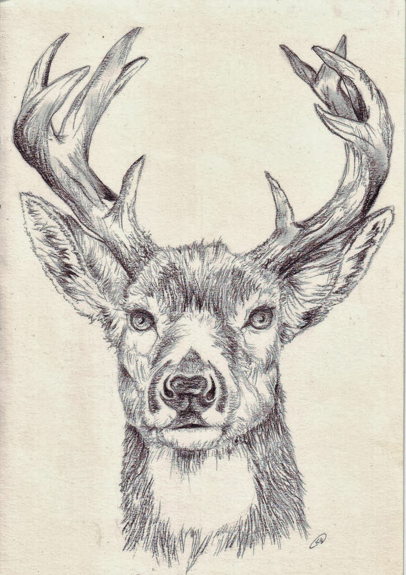 Tatuagem Alce - Tatuagem Veado - Tatuagem CervoDrawings Of Deer Bucks