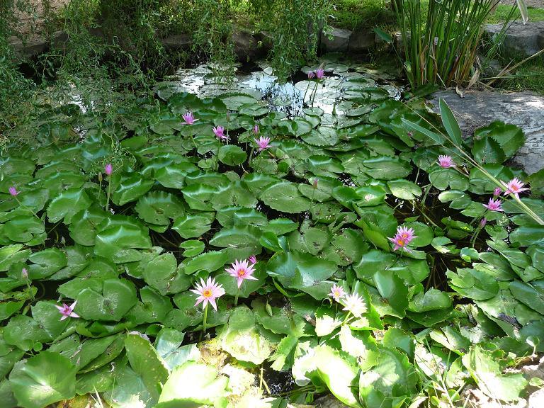 Amo buenos aires la ruta de las flores for Viveros en escobar