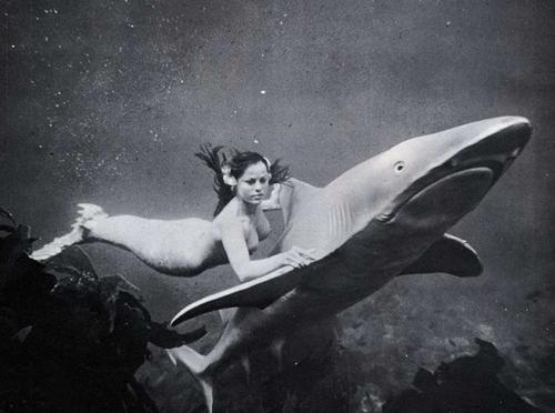 vintage bath webber shark