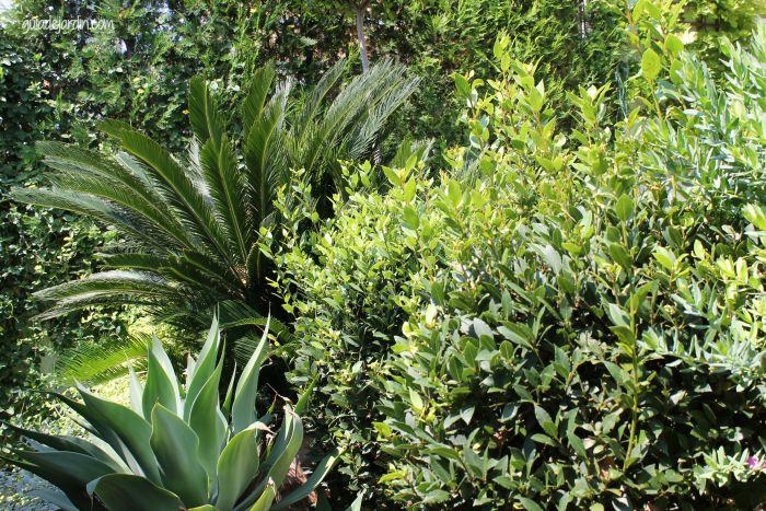 Cica, agave y laureles