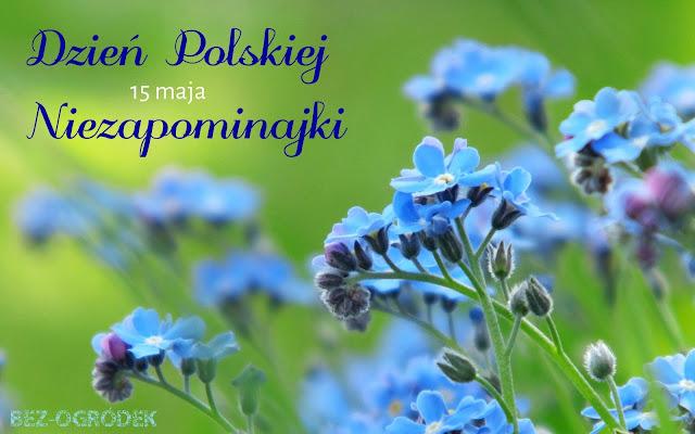 Dzień Polskiej Niezapominajki