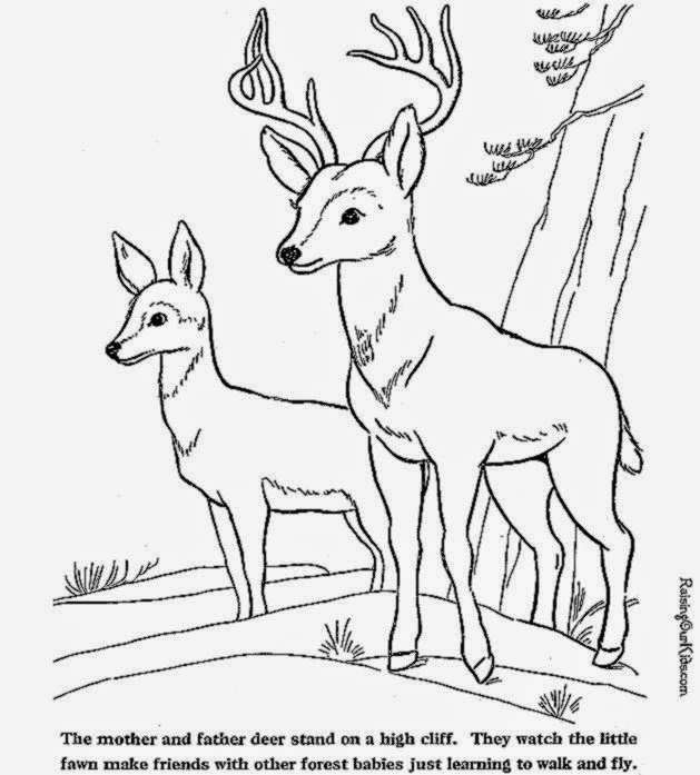 Coloring pictures of deer free coloring pictures for Deer coloring pages for adults