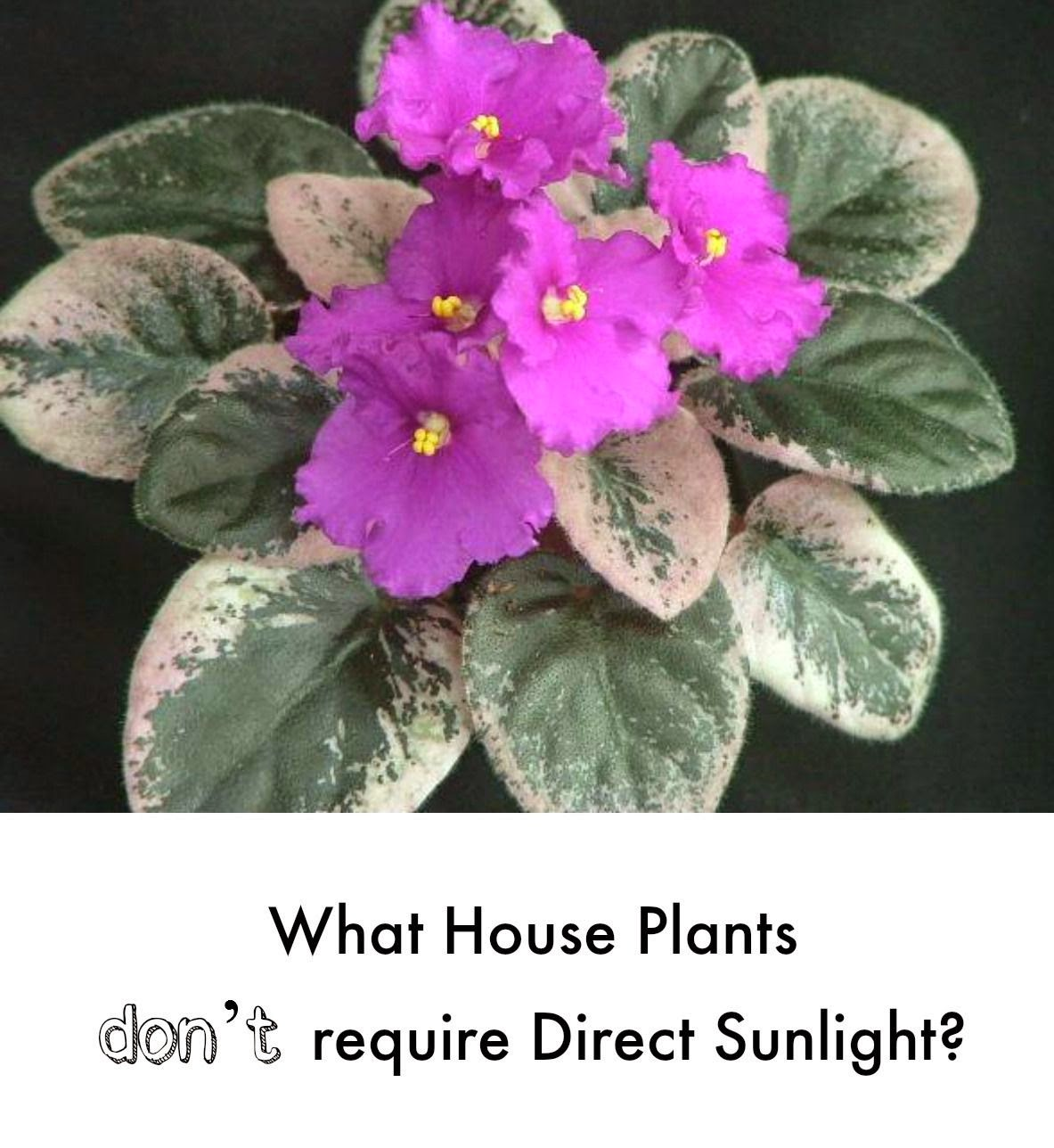 28 Plants That Don T Need Light 4 Plants That Don T Need
