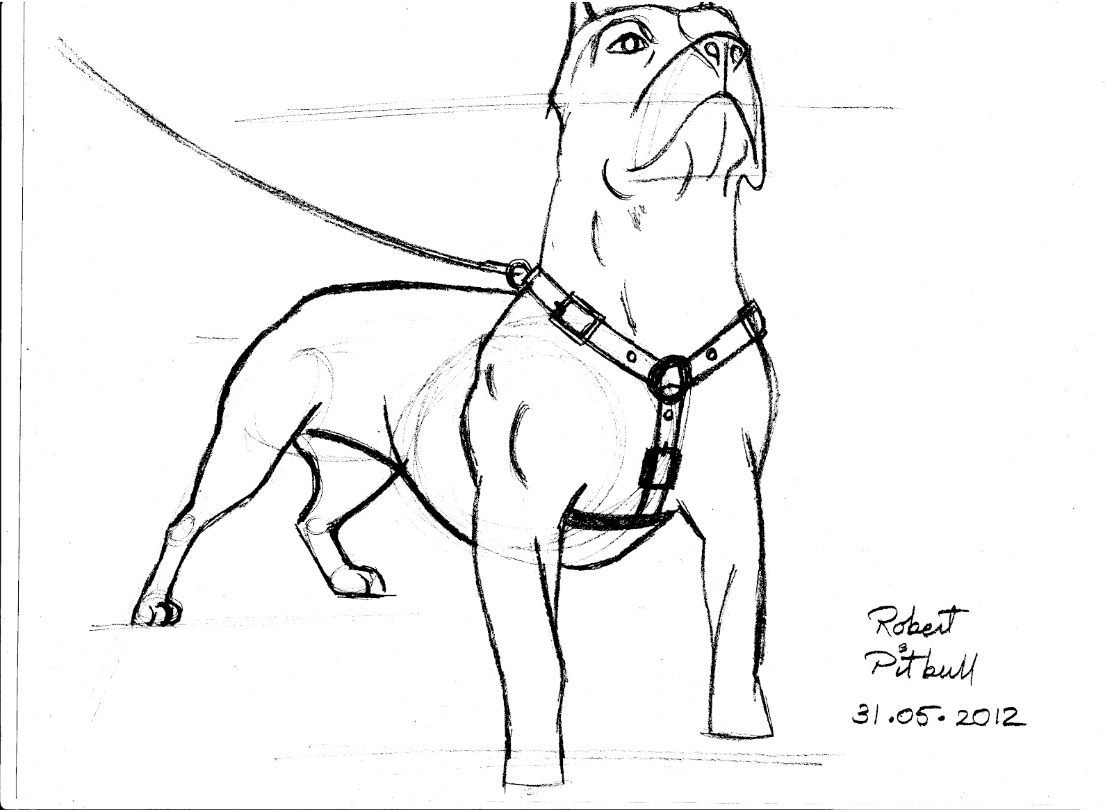 pit bulls coloring pages - photo#19