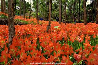 Taman Bunga Puspa Pathuk Gunungkidul