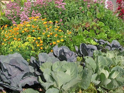 Huerto jardin ecologico dise ando el huerto jardin for Huerto y jardin