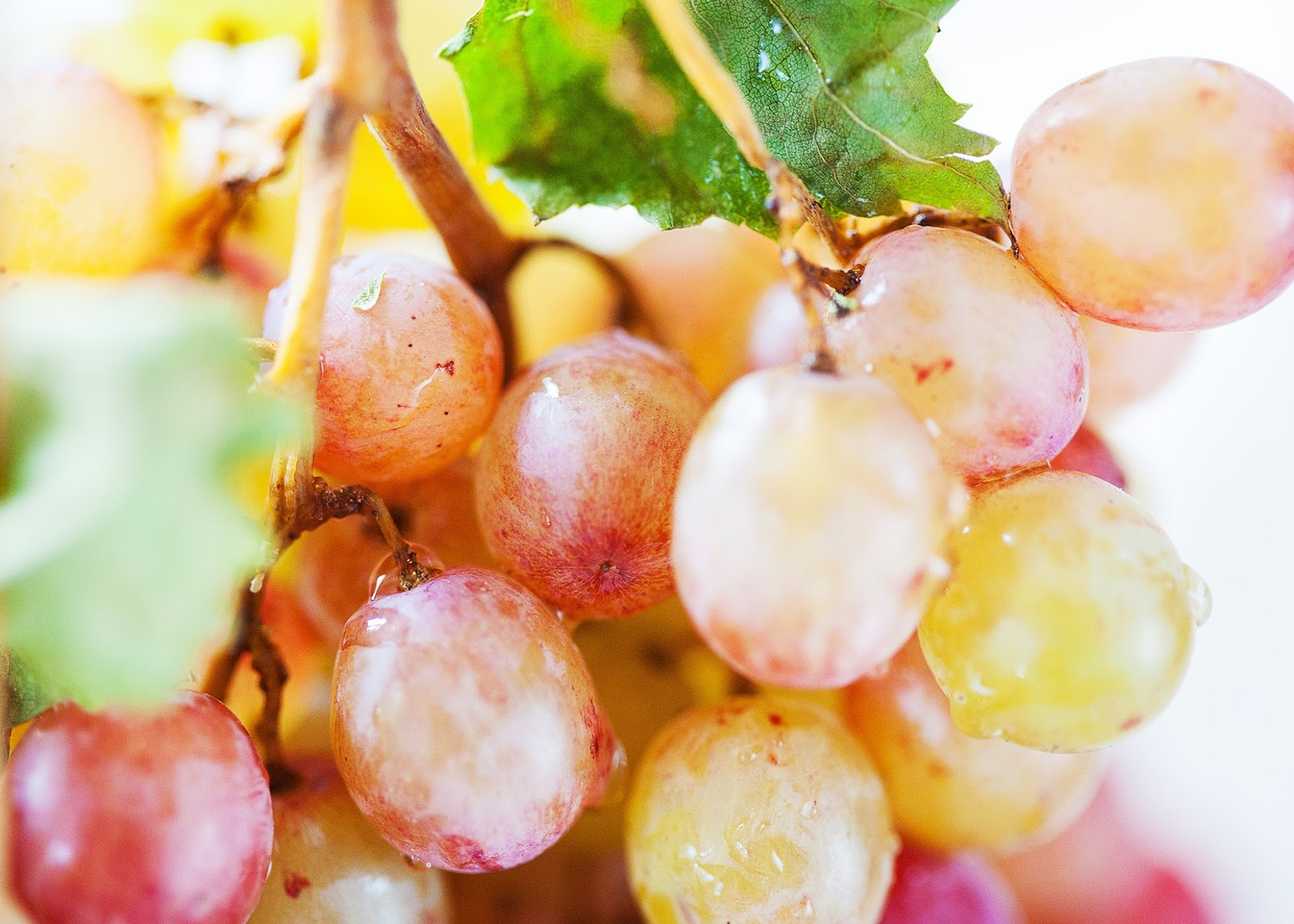 Kailey j flynn photography table grapes for Table grapes