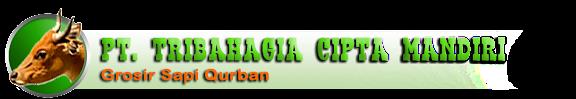 Harga Jual Sapi Kurban 2014  | Sapi Qurban