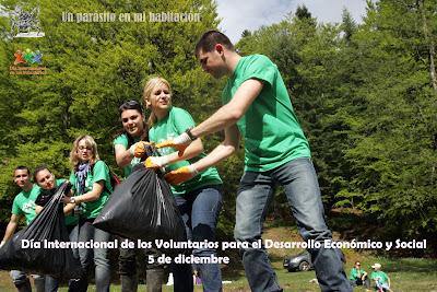 voluntarios, verde, bolsas