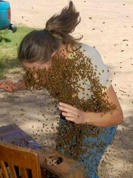 Photo of the day Bees attack a woman
