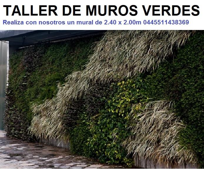 Taller muros verdes jardines verticales de interior for Muros verdes en mexico