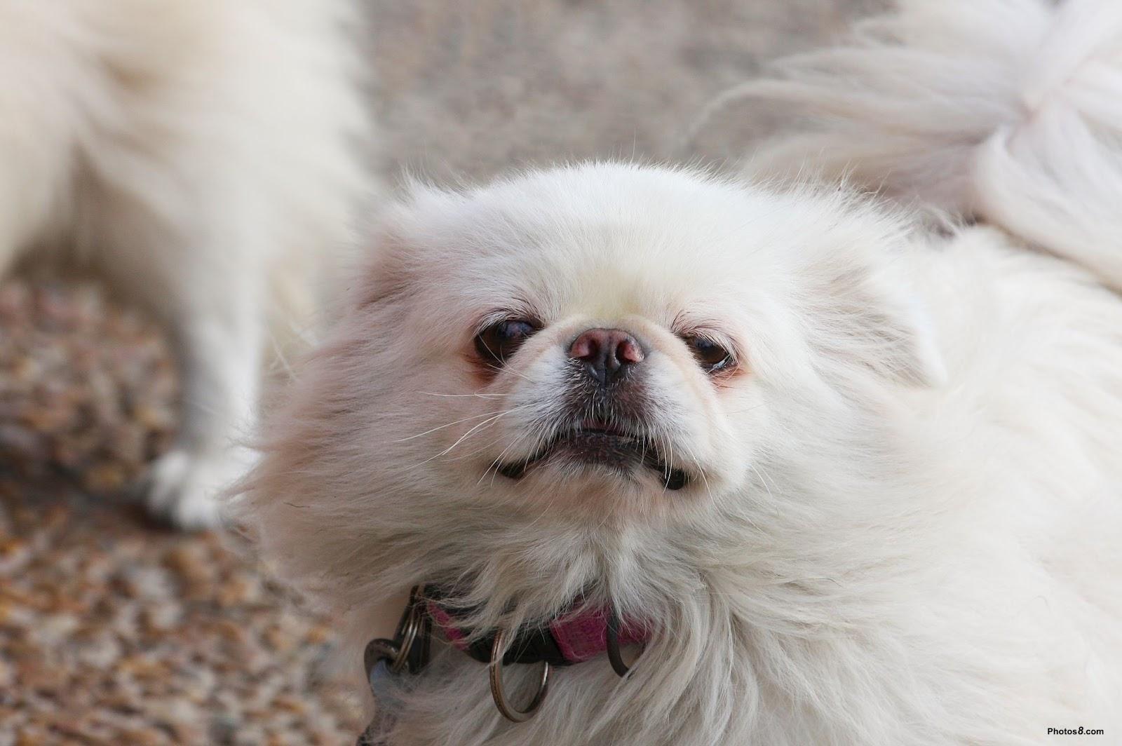 Good For Older Dogs Eyes