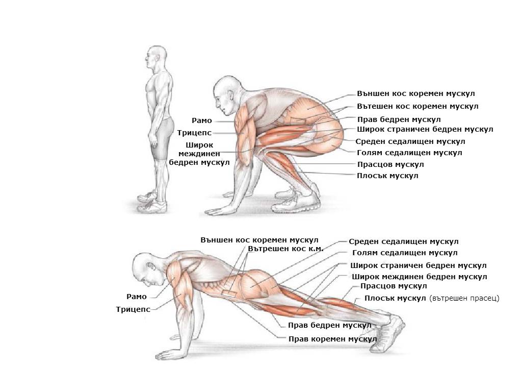 Кои мускули вземат участие при изпълнението на бърпи