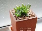 http://finfingarden.blogspot.com/2014/12/haworthia-cactus-succulent-cacti-nature.html