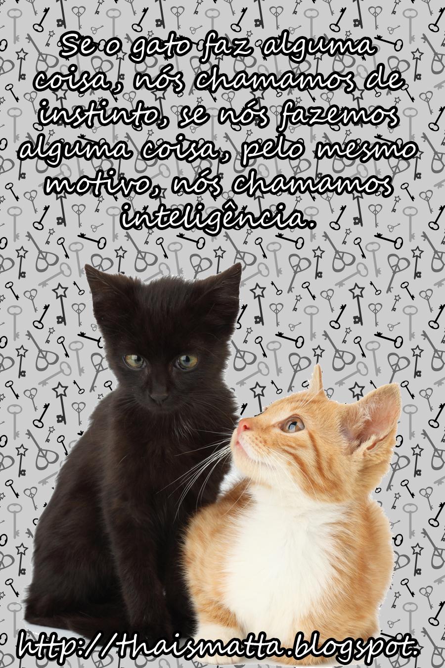 Super Proteção aos Animais: Gatos X Toxoplasmose - Saiba mais sobre o  KQ17