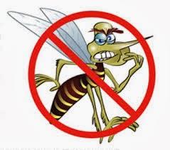 ambiente libre de mosquito transmisor del Dengue