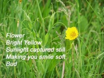 cinquain poem about flowers - photo #7