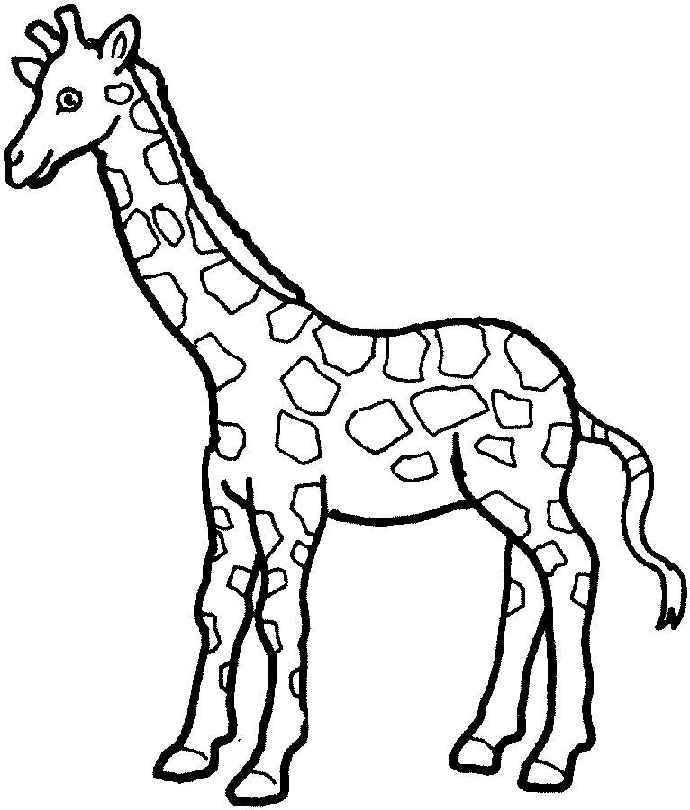 imagens de animais selvagens para colorir desenhos para pintar e