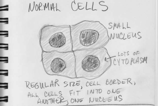 'normal' cells