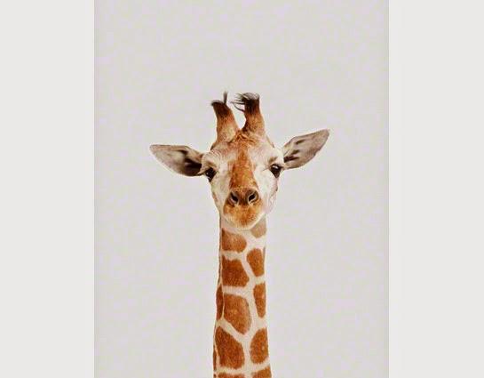 Redesignation Design Inspiration Animal Print Art
