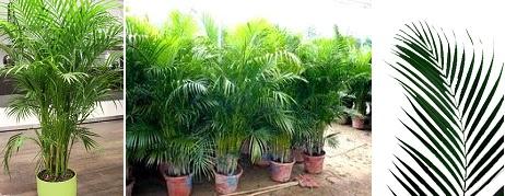Plantamer plantas que limpian el aire Plantas limpiadoras de aire