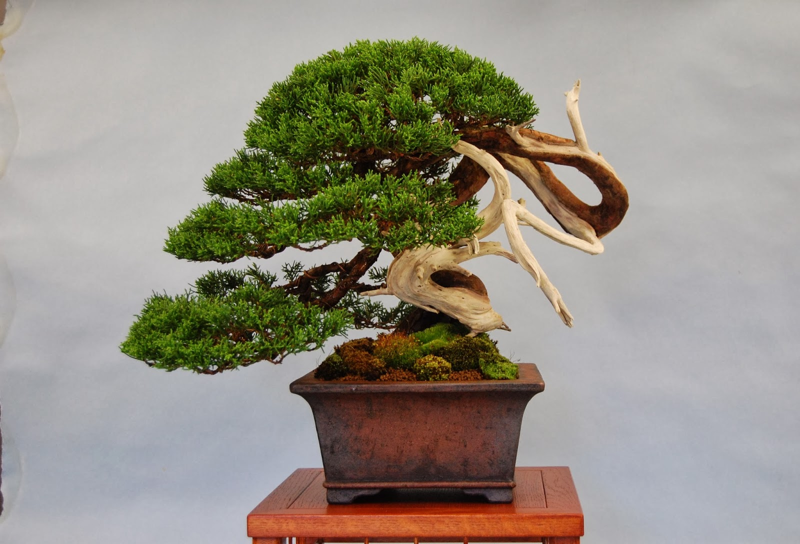 Steve Tolley39s Bonsai And Suiseki Blog October 2013