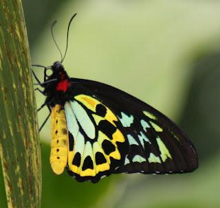 kupu-kupu yang indah atau cantik