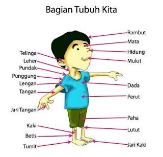 Fakta Tentang Tubuh Manusia.alamindah121.blogspot.com