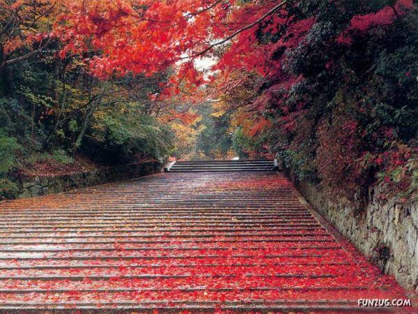 beautiful roads